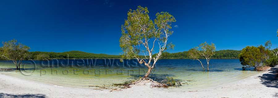 White sand & clear waters of Lake McKenzie