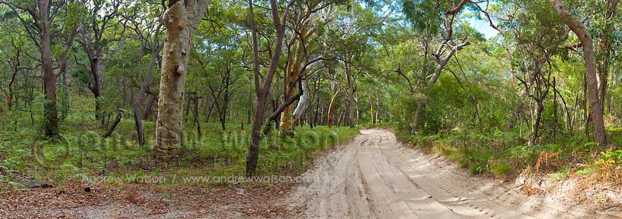 Track through scribbly gum forest near Eurong Station