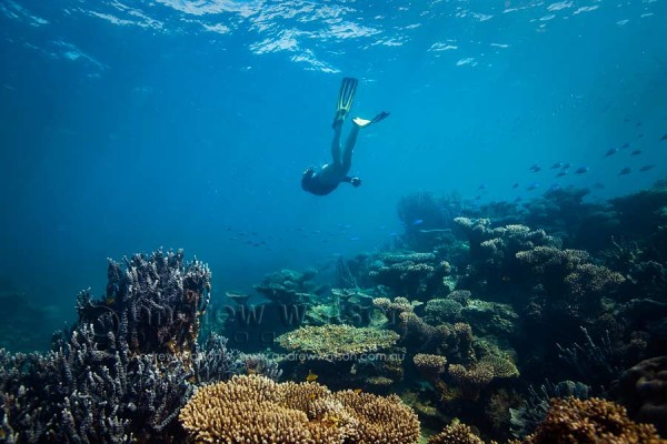 Ningaloo marine park travel lifestyle photographer andrew watson photography - Ningaloo reef dive ...