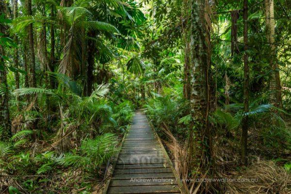 Rainforest boardwalk at Cairns Botanical Gardens