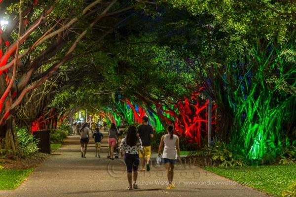 People walking through the avenue of fig trees at twilight, Cairns Esplanade
