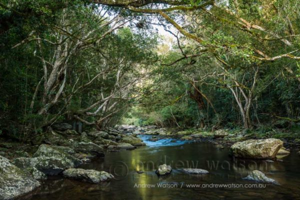 Rainforest waterway at Crystal Cascades