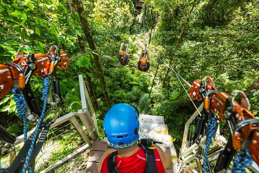 View from rainforest canopy platform of people racing on zipline