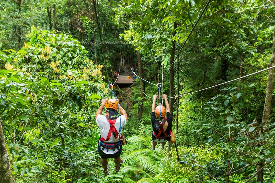 View of couple racing down rainforest zipline