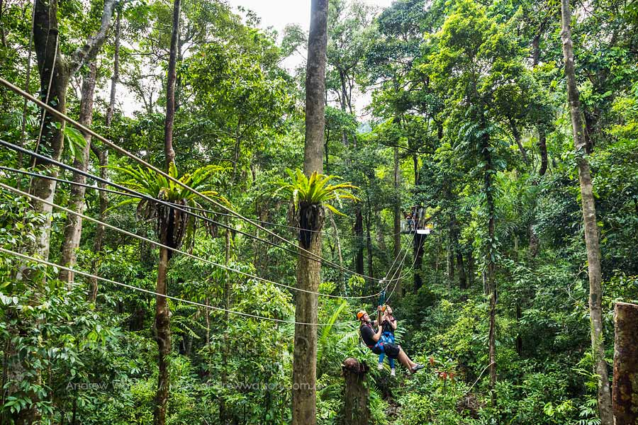 Couple ziplining in Daintree rainforest canopy