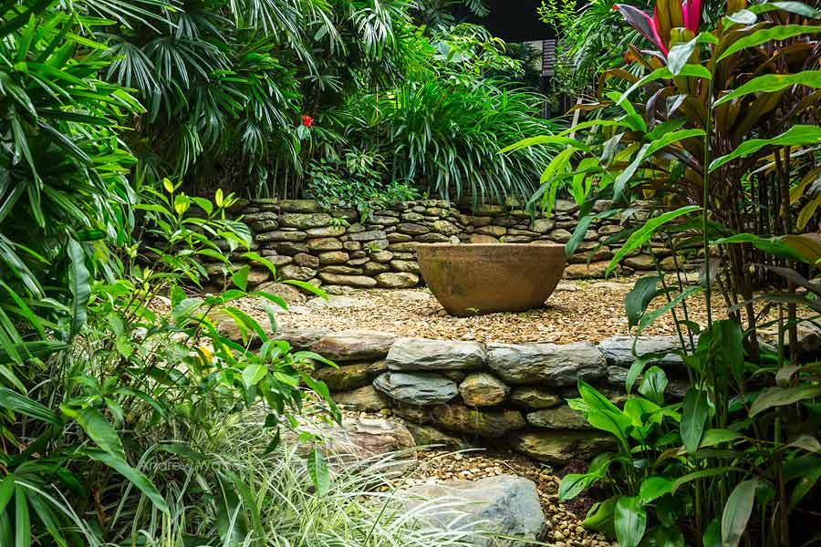 Image of residential tropical garden in Port Douglas