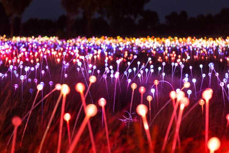 Image of the Field of Light Installation at Uluru