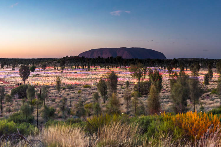 Image of the Field of Light Installation and Uluru