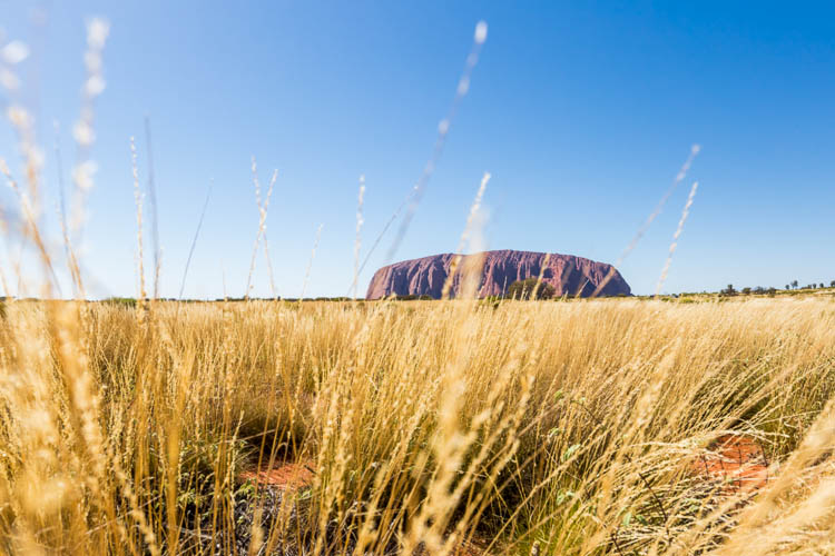 Image of Uluru viewed through the desert grass