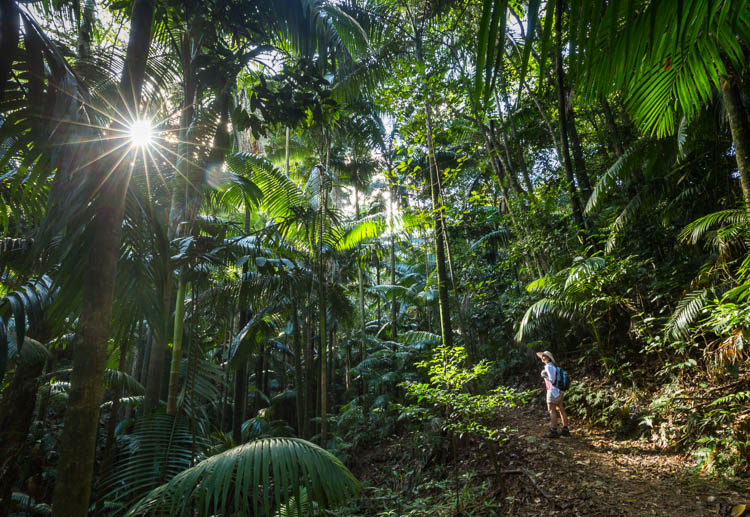 Image of hiker in the rainforest at Eungella National Park