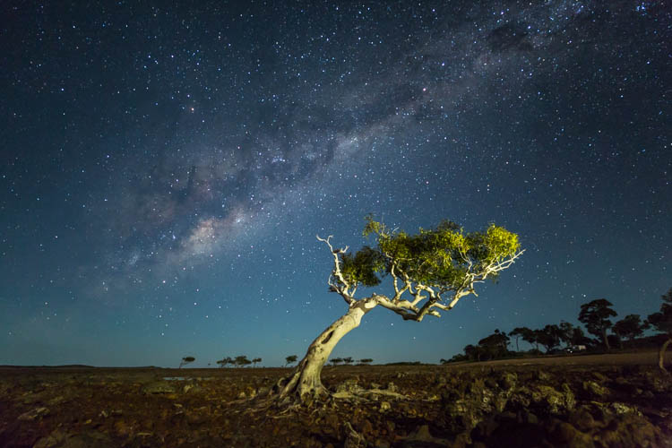 Image of mangrove tree under the Milky Way at Clairview Beach