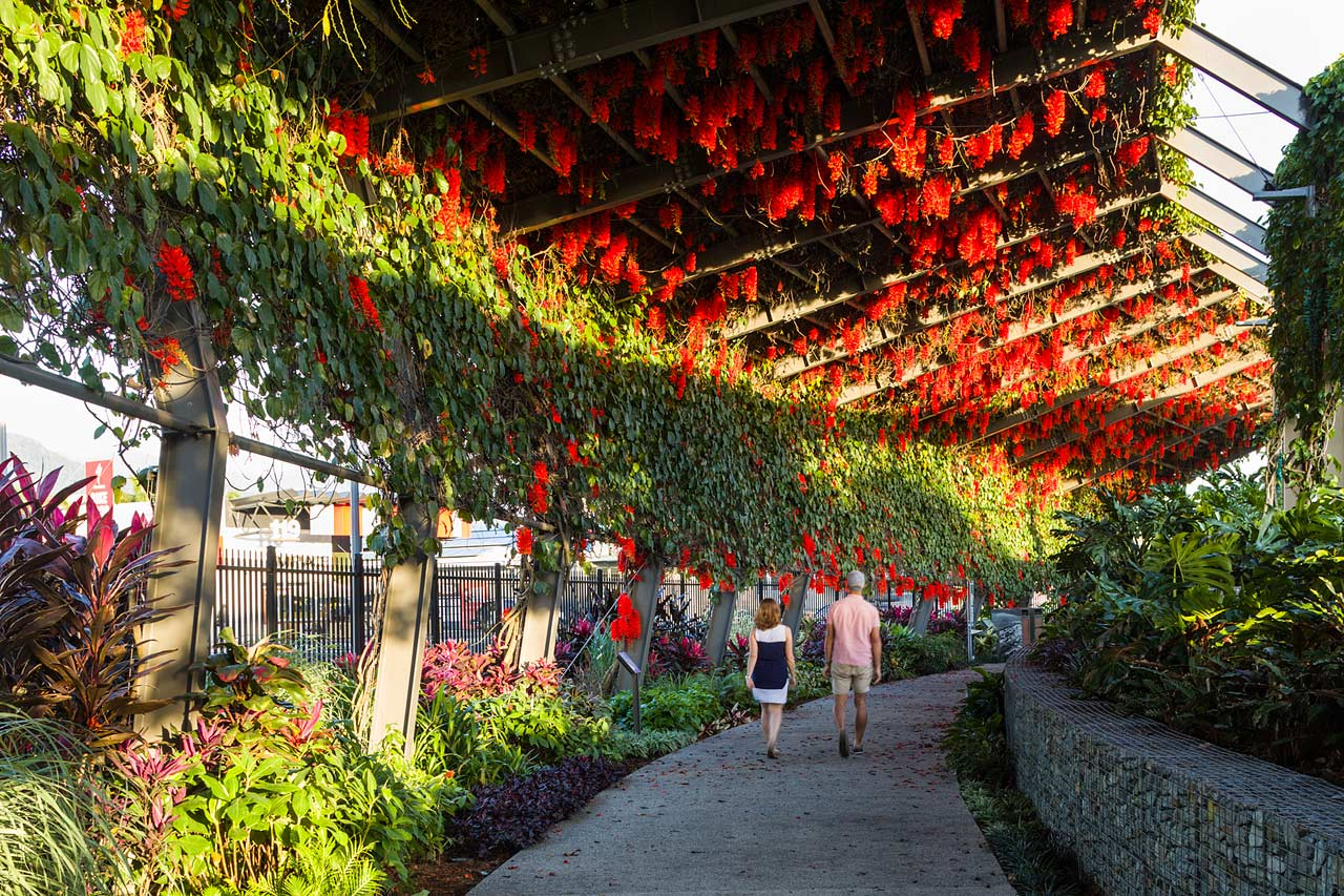 A couple walking under an arbour walkway laided with flowers in full bloom